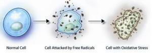 Modificazione cellulare da Radicali Liberi